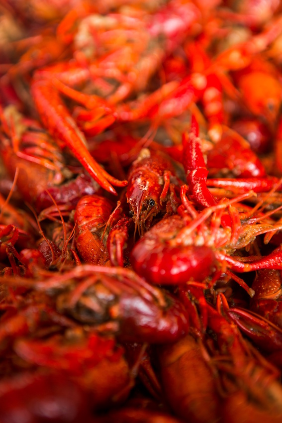 Crawfish Bash (1)