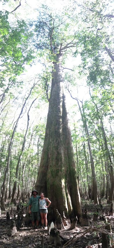 DNB champ cypress