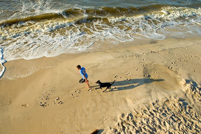 Dogs on the beach, Dauphin Island