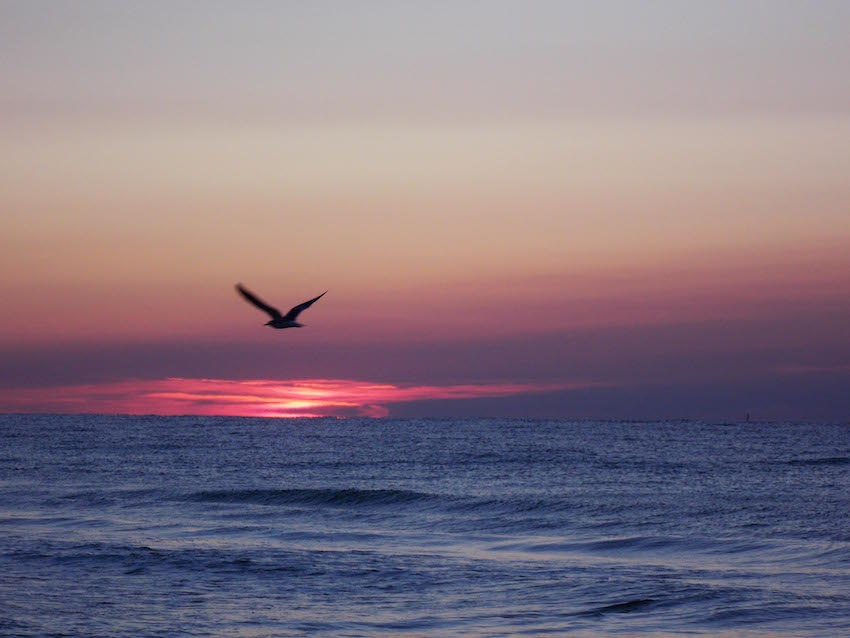 Sunrise Romar Beach Area 09_25_1220111231_2696