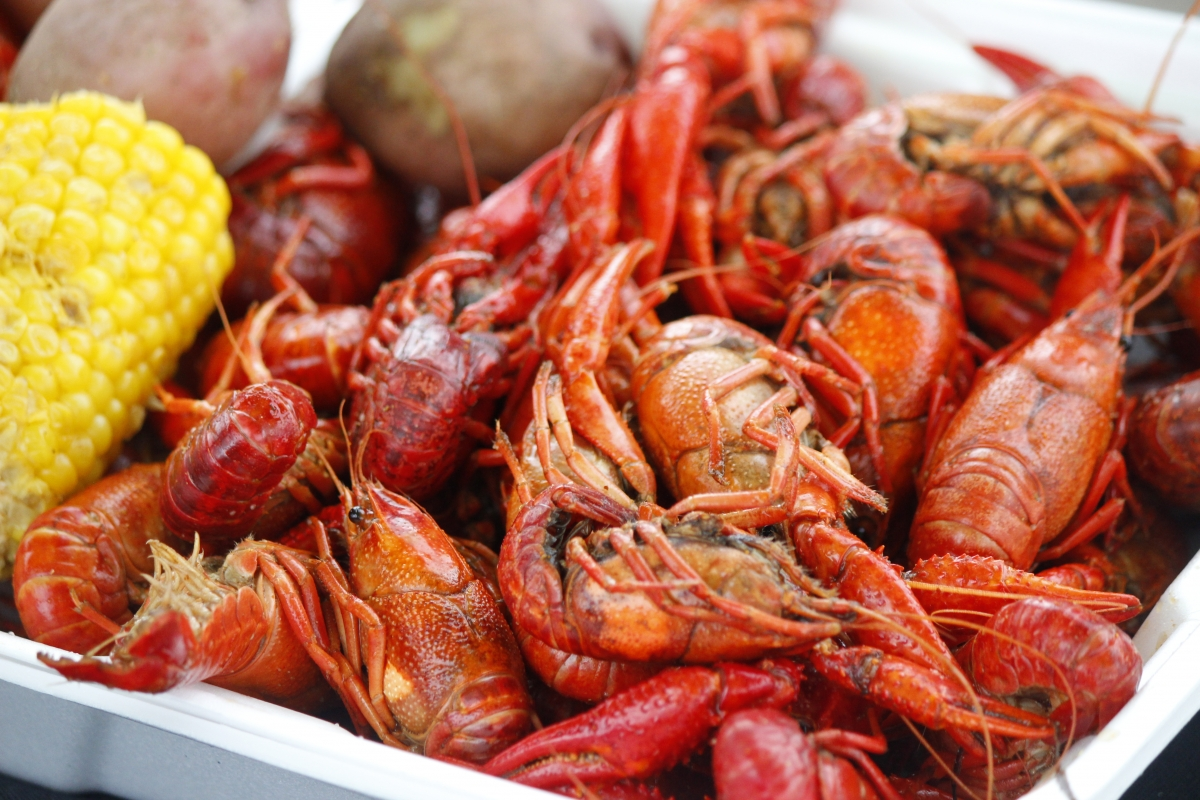 Zydeco & Crawfish Festival, Gulf Shores