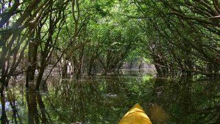 Discover North Baldwin: Fish, Kayak or Hike your way through an adventure!