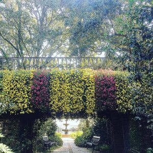 Mums cascade over the entrance to the rose garden at Bellingrath. Photo from Bellingrath Gardens and Home.