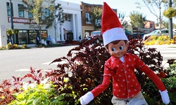 Eastern Shore Elf