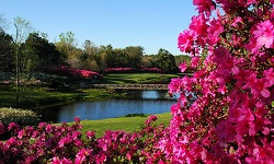 Azaleas on Mirror Lake at Bellingrath Gardens.