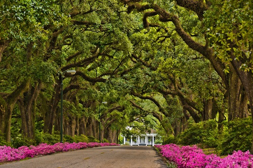 Avenue of Oaks at Spring Hill College, Mobile