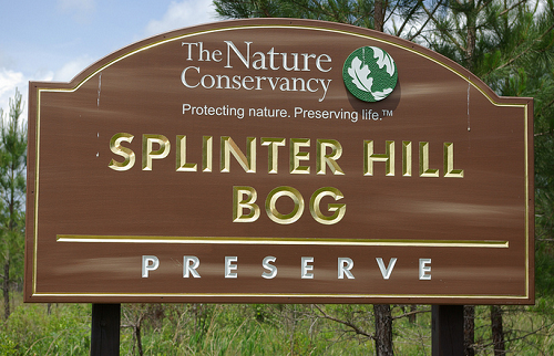 Splinter Hill Bog
