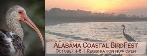 John L. Borom Alabama Coastal BirdFest, fall festival