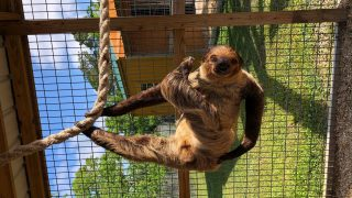 Summer school - sloth